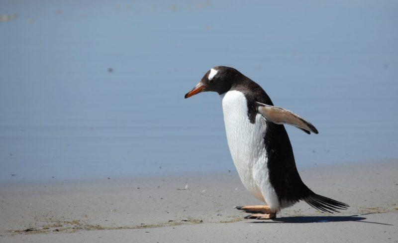 Penguin Zesto fundraiser